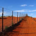 dog-fence2