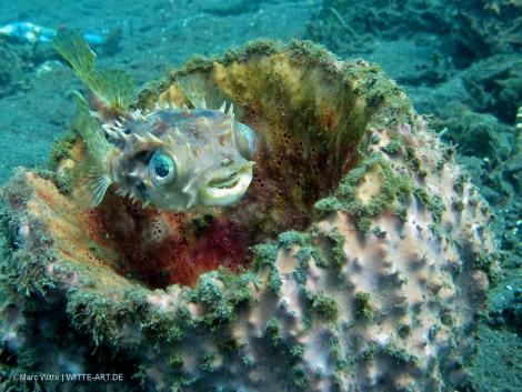 blurrfish
